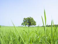 従来のコーティング剤と異なり、液剤にVOC(揮発性有機化合物)を含みません。 人と環境にやさしいコーティング剤です。